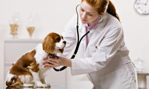 animal-clinic-in-lahore-1